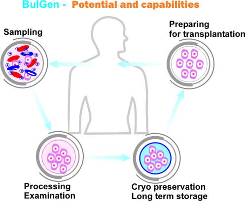 BULGEN_potential_EN